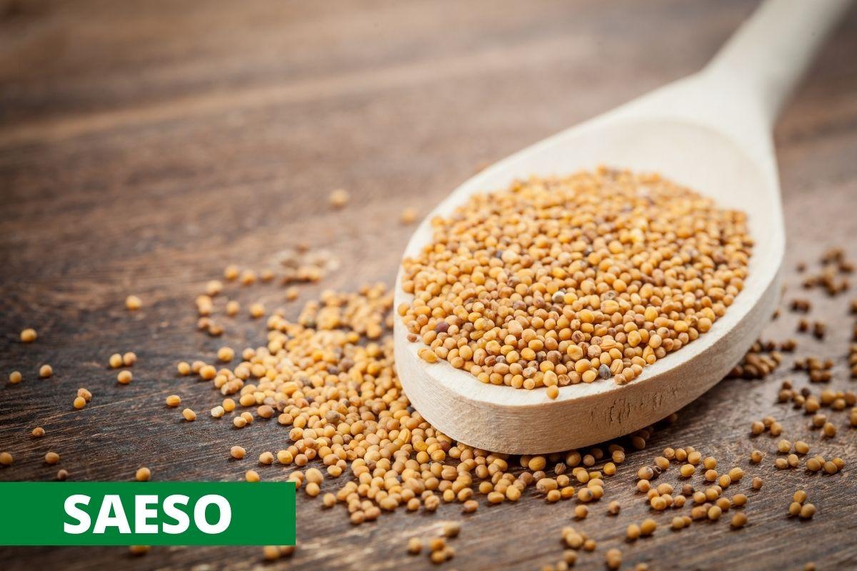 Mustard (Sarso)