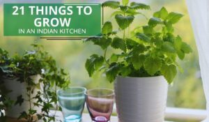 21 Things to Grow in an Indian Kitchen Garden